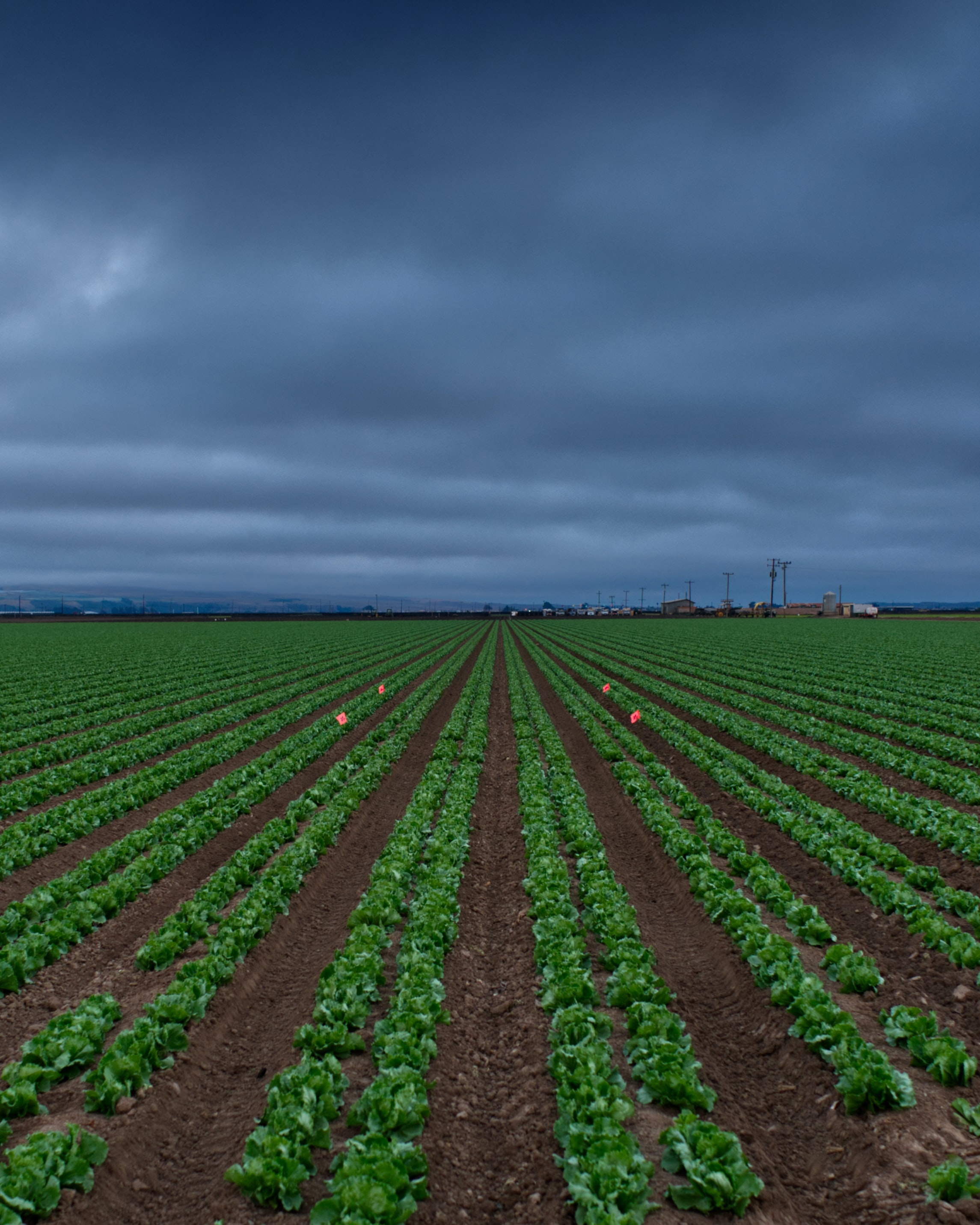 image of vegetable plant field